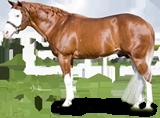 http://horsetalk.co.nz