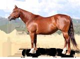 http://www.kcperformancehorses.net